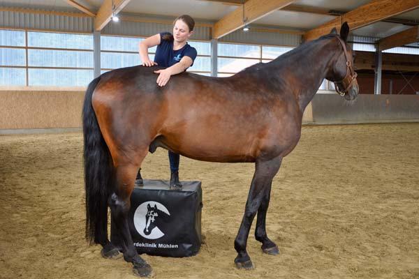 Behandlung am Pferderücken